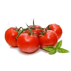 עגבניות-חממה.png